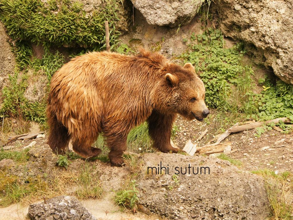 Tierpark Hellbrunn baer