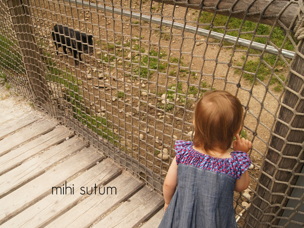 Tierpark Hellbrunn schwein