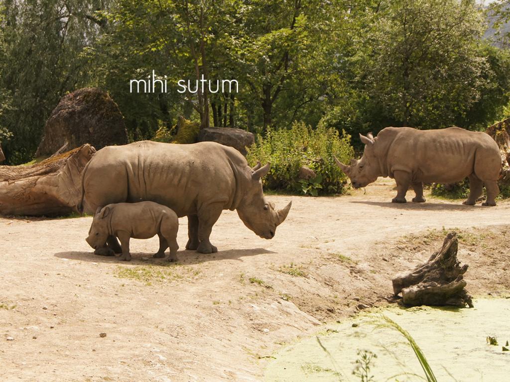 tierpark hellbrunn rhino